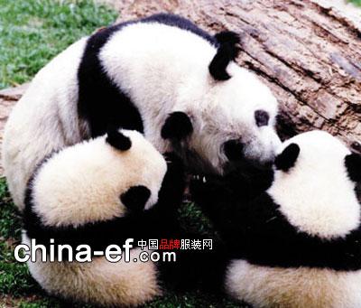我国国宝大熊猫需要我们来保护